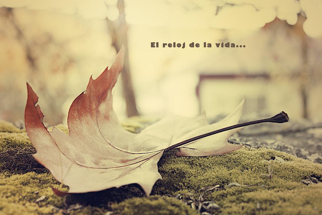 El Reloj De La Vida Vanesilla2011 Flickr
