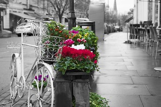 Bike and flowers | by Jamie McCaffrey