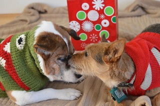 Holiday card outtake #2 | by wantmorepuppies