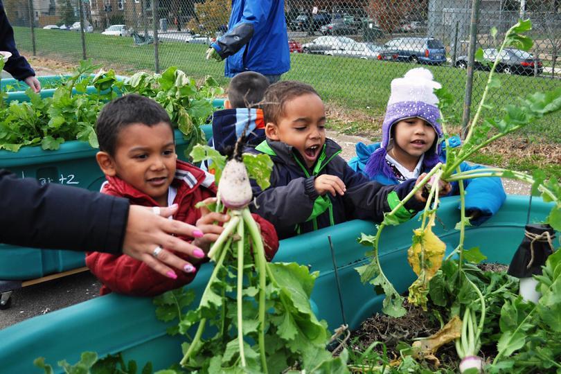 Image result for kids gardening