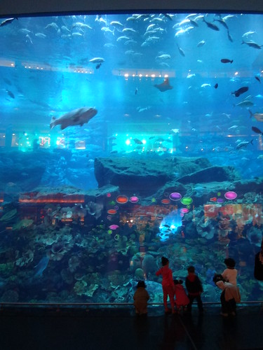 Dubai Mall Aquarium Abdulla Al Muhairi Flickr