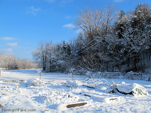 the snowy kitchen garden on 12-29-12 | by Farmgirl Susan