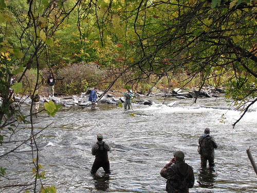 Salmon river festival fishing derby oswego county ny for Salmon river ny fishing