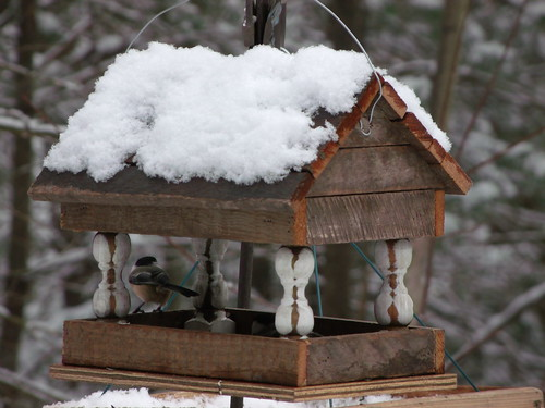 black capped chickadee in feeder | by grandmapearl