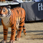Dia Mundial del Tigre 2015