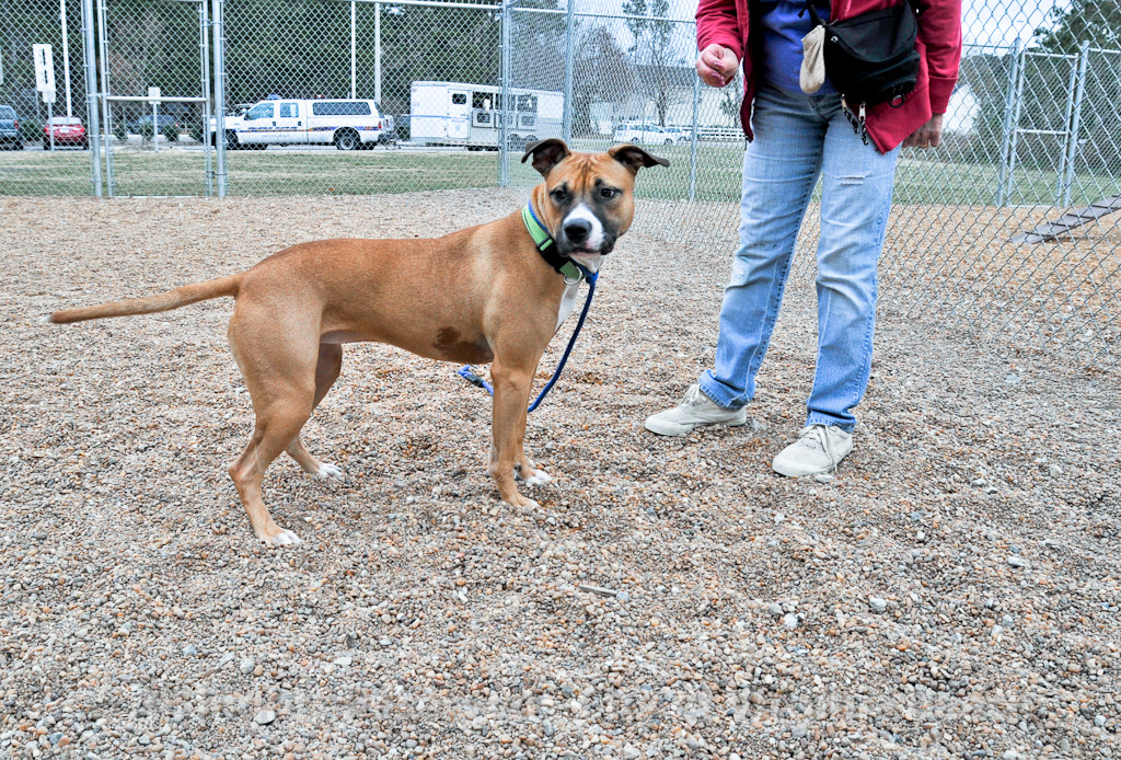 Virginia Beach City Animal Shelter