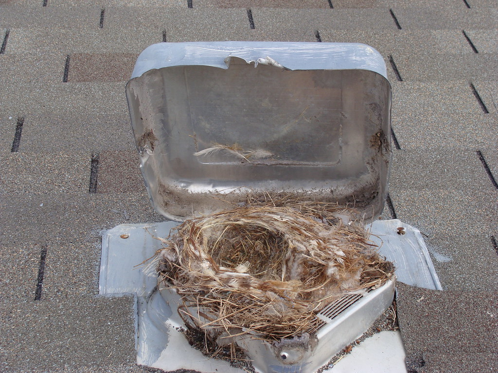 Bird Nest In Dryer Vent Roof Termination The Colony, TX Wwu2026 | Flickr