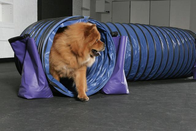 Dog Training Tunnel Uk