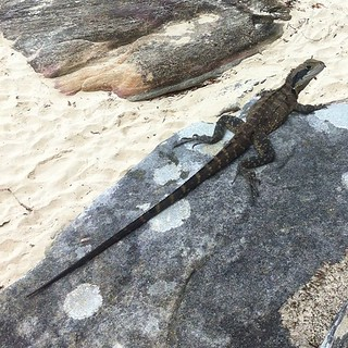 This guy was loving sun baking at the beach today. | by david_a_l