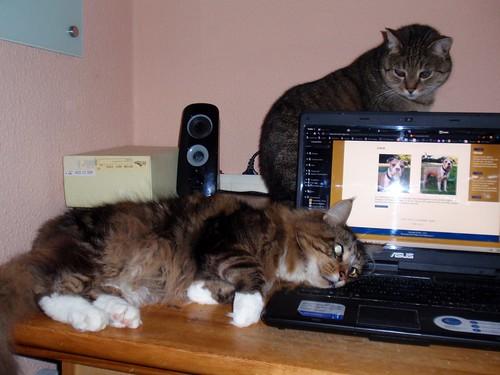 Laptop Belagerung by psychoMUELL, auf Flickr
