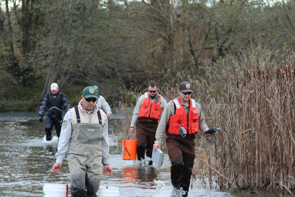 Biologists wade into the river service and california for California department of fish and wildlife jobs