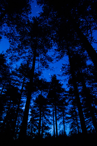 Forest & Stars