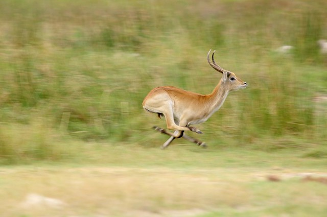 running like an antelope | Flickr - Photo Sharing!