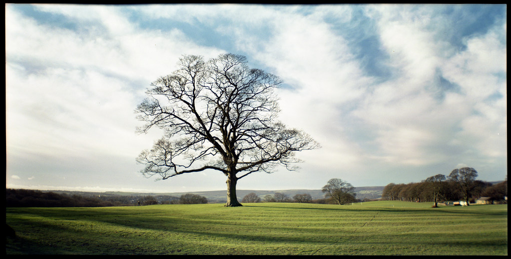 Boxing Day Sycamore Taken With A Lomography Belair X 6