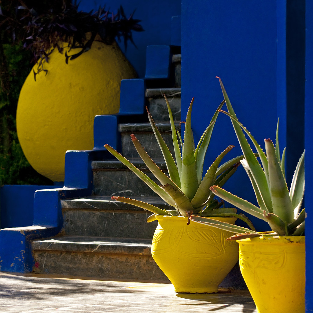 Morocco marrakech jardin majorelle cacti 02 sq flickr for Jardin majorelle