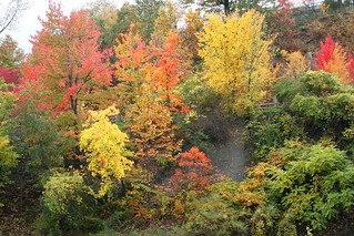 Fall Foliage at Cleveland Metroparks Zoo - Cleveland, Ohio | by FitchDnld