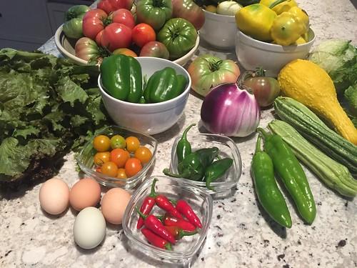 harvest 8-21  IMG_7438