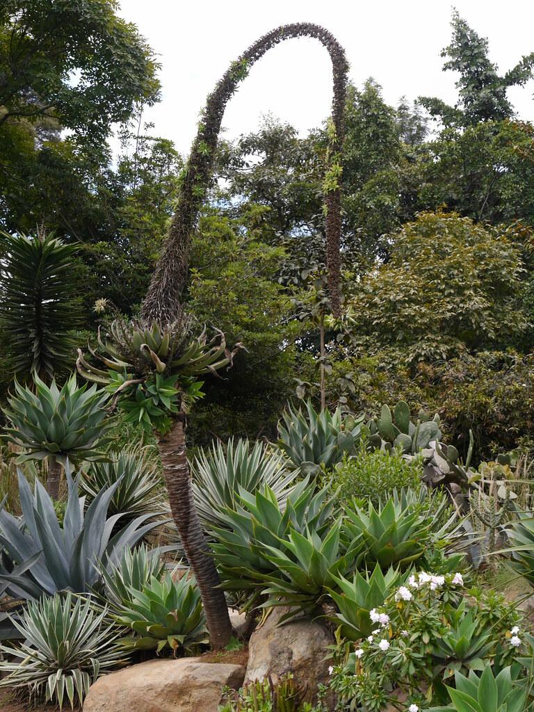 P2230681 | Jardin Botanico Jose Celestino Mutis, Bogota, Col… | Flickr