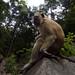 Langkawi Monkeys