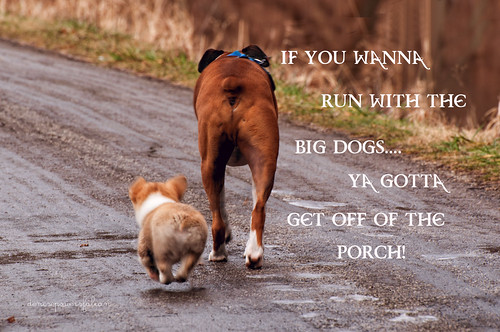 Runnin' with the Big Dogs | by Singing Like Cicadas