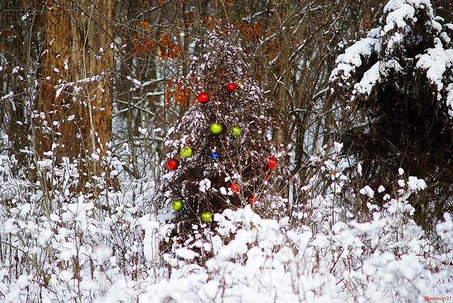 Christmas Decorators In Sarnia Ontario