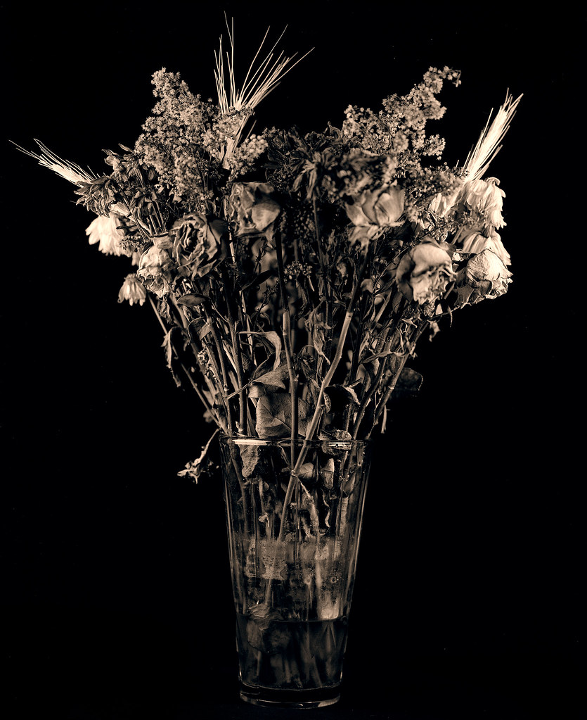 Dead Bouquet Shot With Mamiya Rb67 140mm 45 Lens Agains Flickr