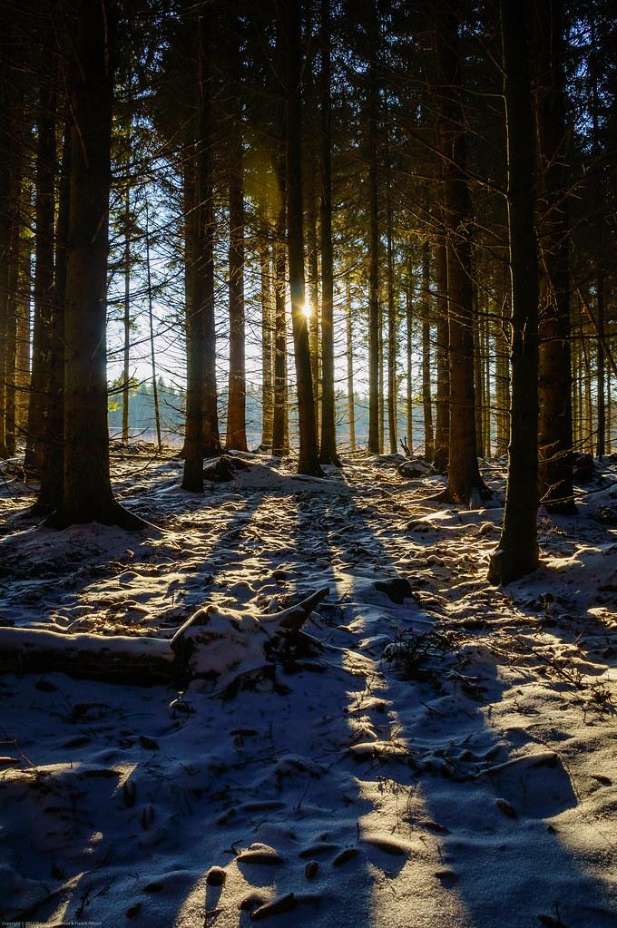 sun through a dark winter forest explore 2013 01 21 this i flickr