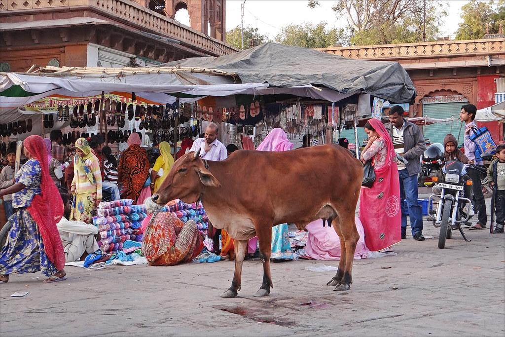 le sardar bazar march de jodhpur le sardar bazar est le flickr. Black Bedroom Furniture Sets. Home Design Ideas