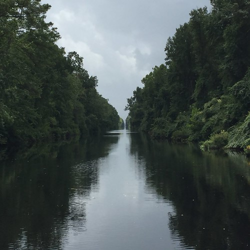 A river cutting through a densely wooded swamp.