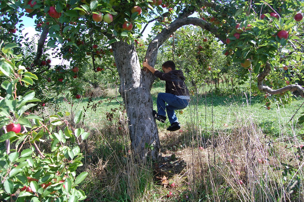 Kid Climbing Tree Kid Climbing Apple Tree