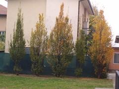2 e carpino filare