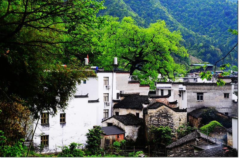 曉起村 5