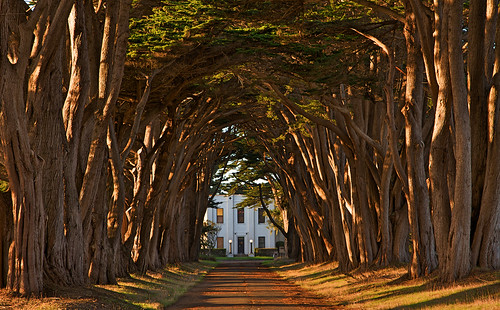 Cypress Tree Avenue at KPH, Point Reyes | by wikiphotographer