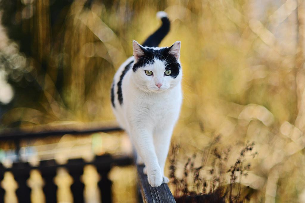 Image Result For A Cat Named