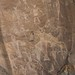 Petroglyphs / Dinosaur National Monument