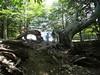 Retour sur le chemin de Prati : un arbre découpé en deux