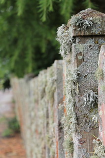 I'm lichen this fence | by BakeJoy
