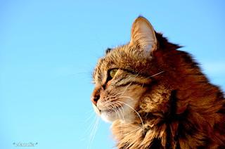 Anche I Gatti Pensano Artù Linsepar Flickr