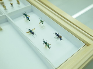 Jewel Wasps | by Tobias Revell