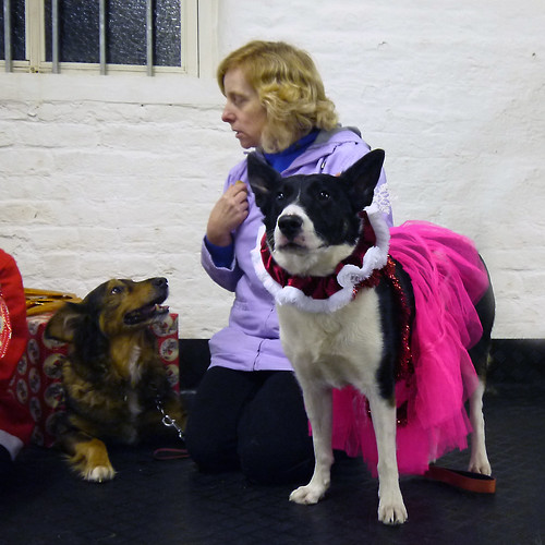 Christmas Party 2012 | by Chadkirk Dog Training Club