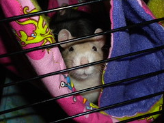 Beatrix, B'Elanna and Kileen's Tunnelk Bunk