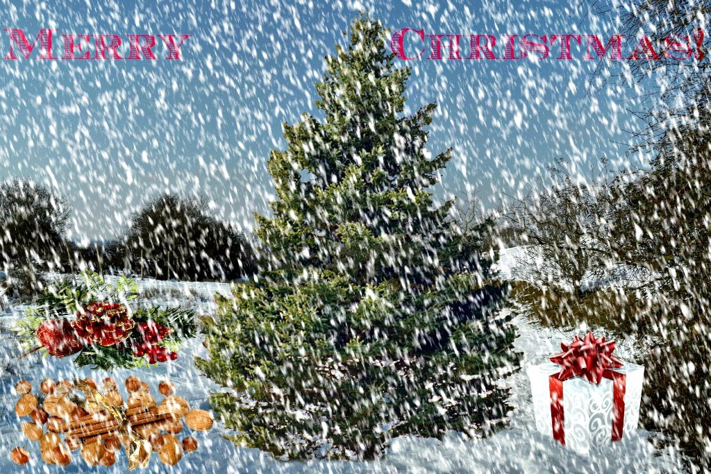 fir tree in christmas scenery in snowy weather fir tree in flickr