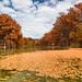 Autumn Leaves – Rio Frio, Texas