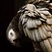 zelda feathers