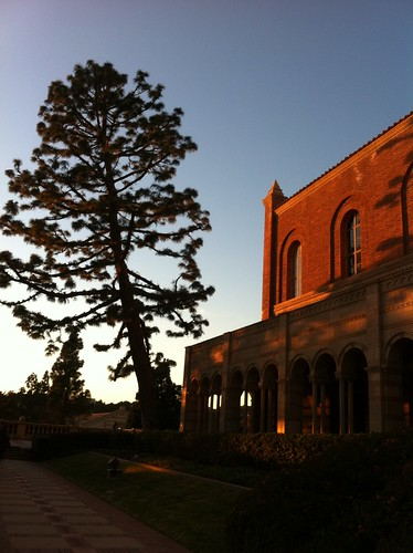 017 Crooked Tree Outside Royce Hall At Ucla At Sunset