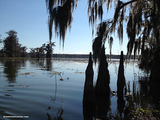 Cajun Country Alligator Swamp Tour 6 | by Downtown Traveler