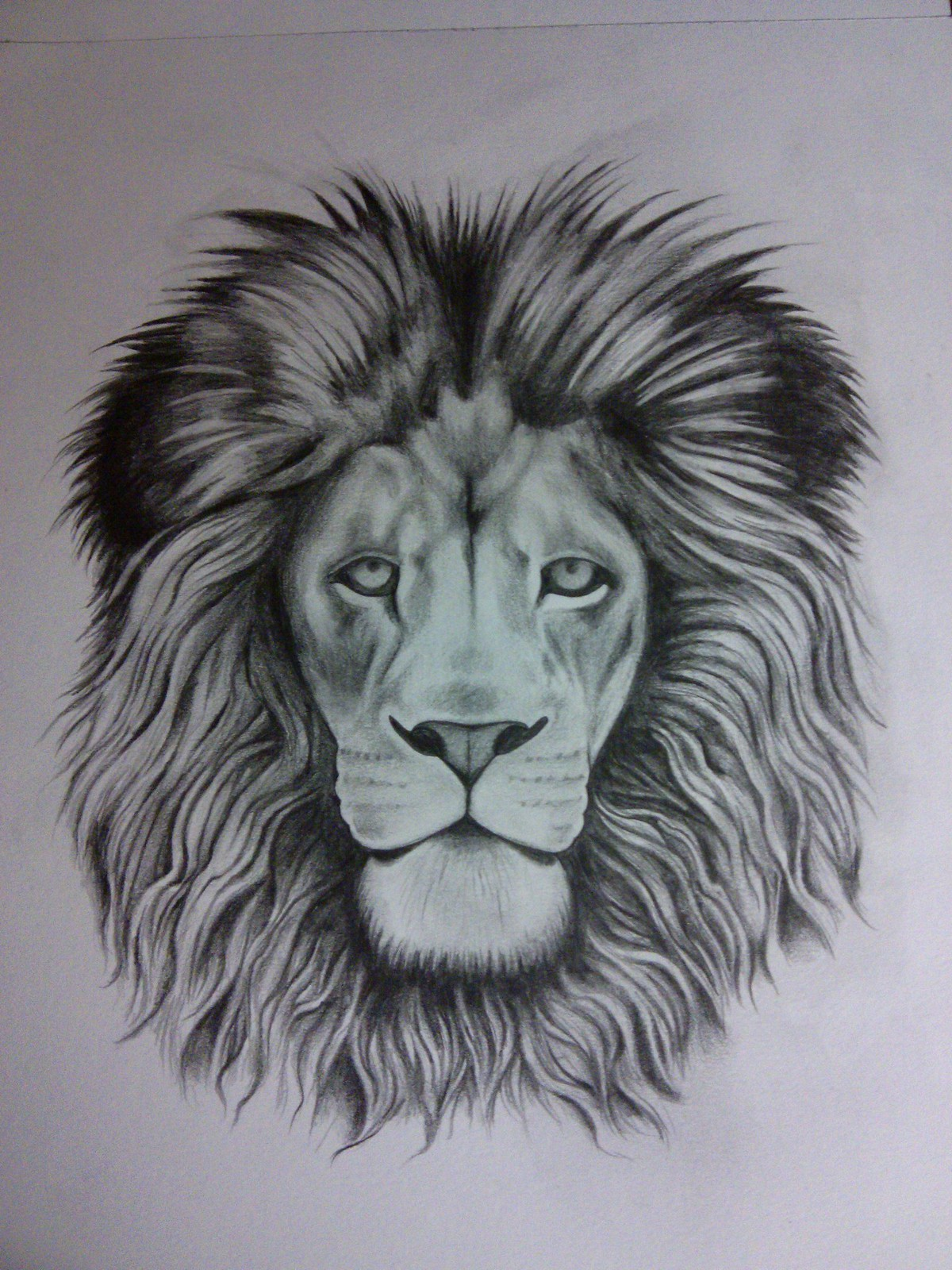 Lion Roaring Drawing Tumblr - photo#17