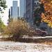 The Leaf Monster - Albany, NY - 2012, Oct - 01.jpg