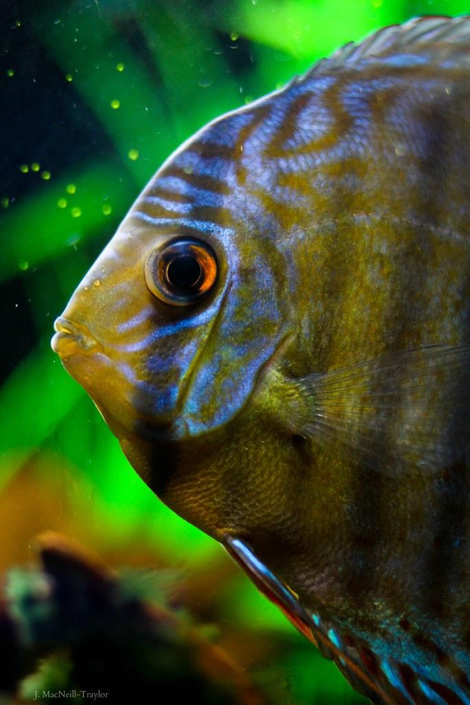 Fishead that fish place lancaster pa jennifer for That fish place lancaster pa