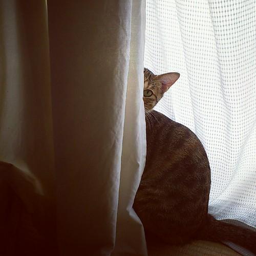 自宅警備ニャンは見た